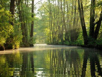 Early Morning in the Spree Forest by Dieter Moebus