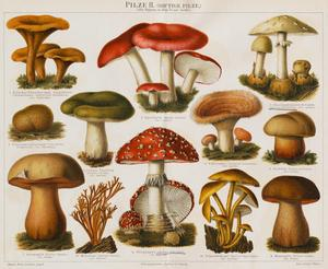 Different Types of Poisonous Mushrooms