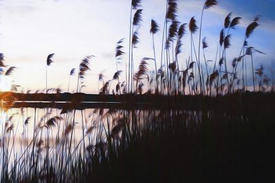 https://imgc.allpostersimages.com/img/posters/digital-art-phragmites-in-blue-sky-sunset_u-L-Q1CQHNO0.jpg?artPerspective=n