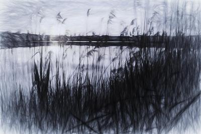 https://imgc.allpostersimages.com/img/posters/digital-art-phragmites-in-gray-pencil-sketch_u-L-Q1CQI6M0.jpg?artPerspective=n