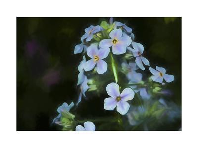 https://imgc.allpostersimages.com/img/posters/digital-art-wild-cyan-and-purple-flowers_u-L-Q1CQDTM0.jpg?artPerspective=n