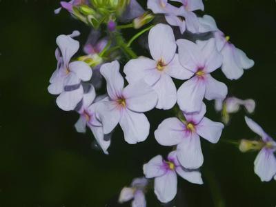 https://imgc.allpostersimages.com/img/posters/digital-art-wild-purple-and-pink-flowers_u-L-Q1CQDIH0.jpg?artPerspective=n