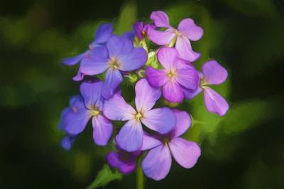 https://imgc.allpostersimages.com/img/posters/digital-art-wild-purple-flowers-close-up_u-L-Q1CQDVI0.jpg?artPerspective=n