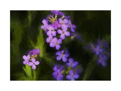 https://imgc.allpostersimages.com/img/posters/digital-art-wild-purple-flowers_u-L-Q1CQE800.jpg?artPerspective=n