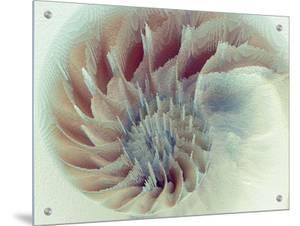 Digital Nautilus