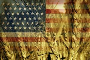 American Agriculture by digitalista