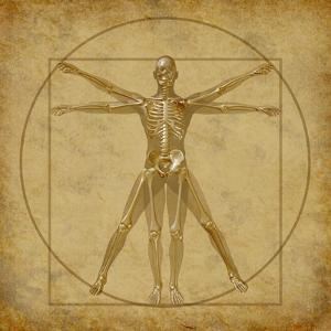 Vitruvian Human Diagram Grunge Medical Chart by digitalista