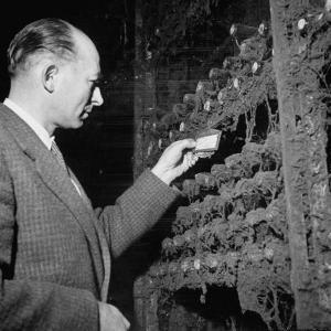 Director Yoes Kressmann, Looking at the Chateau Lafite Kept for His Own Personal Consumption