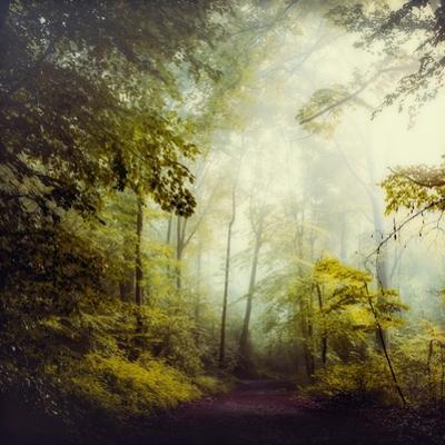 Glorious Woods by Dirk Wuestenhagen