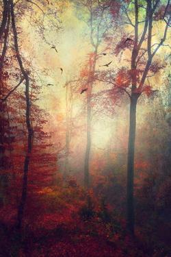 Haze by Dirk Wuestenhagen