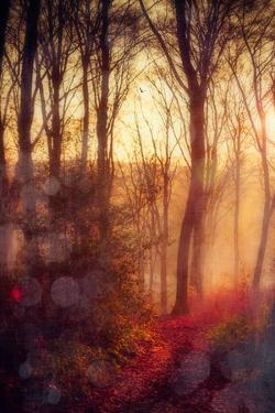 Seasons Light by Dirk Wuestenhagen