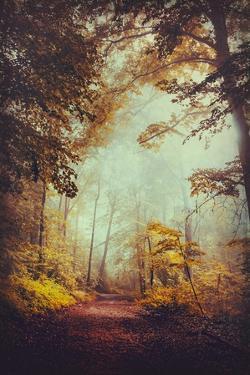 Silent Forest by Dirk Wuestenhagen