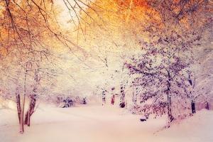 Snowy Sunrise by Dirk Wuestenhagen