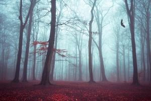 Solstice in Fog by Dirk Wuestenhagen