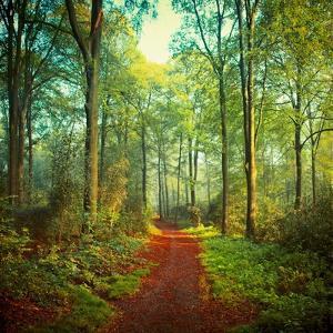 Sunday Morning Walk by Dirk Wuestenhagen