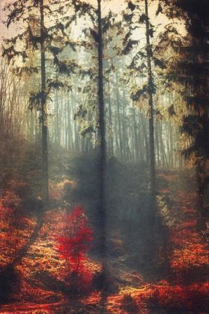 Weight of Light by Dirk Wuestenhagen