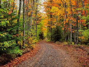 Dirt road passing through a forest, Keweenaw Peninsula, Upper Peninsula, Alger County, Michigan...