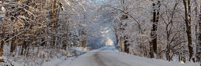 Dirt road passing through snow covered forest, East Hill, Quebec, Canada