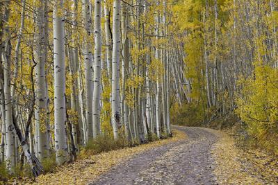 https://imgc.allpostersimages.com/img/posters/dirt-road-through-yellow-aspen-in-the-fall_u-L-PXXWEH0.jpg?p=0
