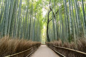 Arashiyama Bamboo Grove in the Morning, Kyoto, Japan by Discover Japan