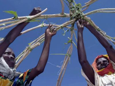 Displaced Sudanese Women Try to Rebuild their Tents in Refugee Camp in the Darfur Area of Sudan