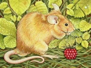 The Raspberry-Mouse by Ditz