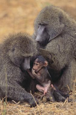 Baboon Family by DLILLC