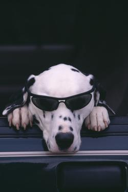 Dalmatian Wearing Sunglasses by DLILLC