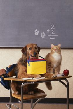 Dog and Cat at School by DLILLC