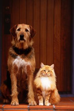 Dog and Cat on Front Porch by DLILLC