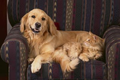 Dog and Cat Sitting in a Chair by DLILLC