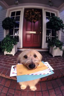 Dog Holding Mail by DLILLC