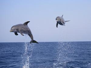 Dolphin Breaching the Oceans Surface by DLILLC