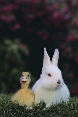 Duckling and Rabbit by DLILLC