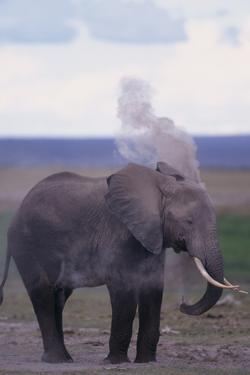 Elephant Dust Bathing by DLILLC