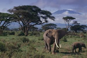 Elephants and Mountain by DLILLC