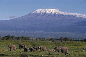 Elephants by DLILLC