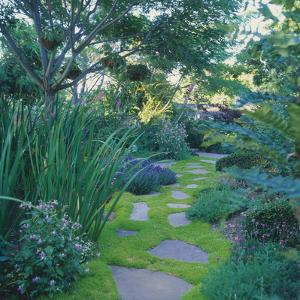Flagstone Path in Landscaped Garden by DLILLC