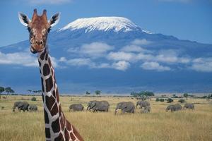 Giraffe and Elephants near Mount Kilimanjaro by DLILLC