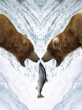 Grizzly Bears Catching Fish by DLILLC