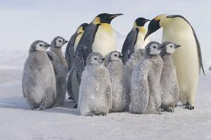 Group of Penguins by DLILLC