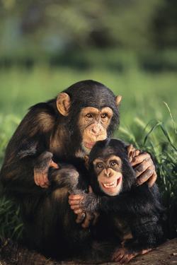 Happy Chimpanzee Family by DLILLC