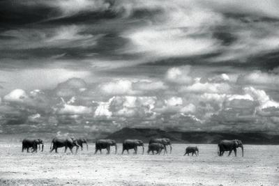 Herd of Elephants on the African Plains by DLILLC