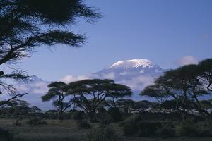 Kilimanjaro and Acacia Trees by DLILLC
