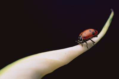 Lady Bug on Leaf by DLILLC