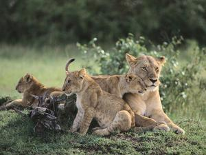 Lioness with Cubs by DLILLC