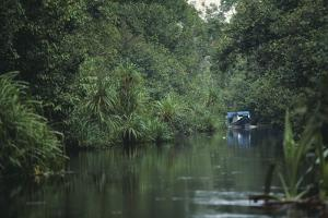 Longboat Traveling through Lush Forest by DLILLC