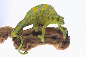 Meller'schameleon by DLILLC