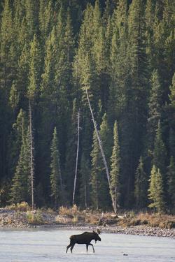 Moose Crossing River by DLILLC