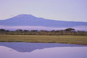 Mount Kilimanjaro, Seen from Amboseli National Park by DLILLC